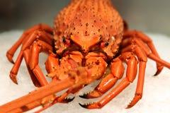 小龙虾-细节 库存照片