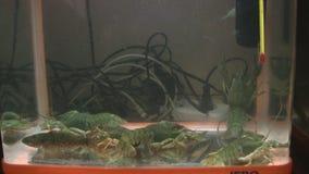小龙虾 股票视频