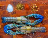 小龙虾 免版税库存照片
