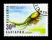 小龙虾Cumella limicola、植物群和动物区系serie,大约1996年 免版税库存图片