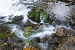 小,伊甸园喜欢溪瀑布 库存照片