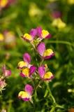 小,逗人喜爱的花在阳光下,清莱,泰国 免版税库存照片