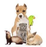 小组一起宠物在前面 背景查出的白色 免版税库存照片