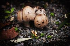 小组三个蘑菇在秋天 免版税库存图片