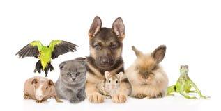 小组不同的动物 背景查出的白色 免版税库存图片
