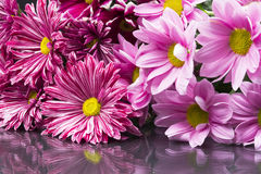 小组与叶子的美丽的菊花花 库存图片