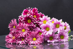 小组与叶子的美丽的菊花花 免版税库存照片