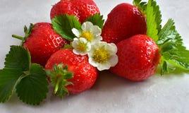 小组与它的叶子和白花的红色草莓 库存照片