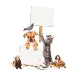 小组与空白的标志的宠物 免版税库存图片