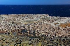 小组与粗毛的岩石企鹅在岩石峭壁 与蓝天的企鹅与白色云彩 企鹅在自然栖所 双翼飞机 库存照片