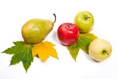 小组与黄色秋天的成熟水多的果子在白色后面生叶 免版税图库摄影