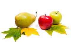 小组与黄色秋天的成熟水多的果子在白色后面生叶 免版税库存照片