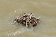 小组两栖鱼在海拿着岩石 免版税库存图片