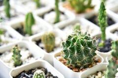 小仙人掌和多汁植物在花店 仙人掌succulen 图库摄影