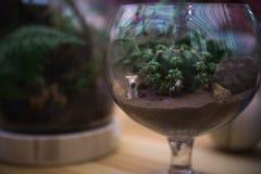 小仙人掌和陶瓷狗在清楚的玻璃 免版税图库摄影