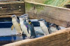 小组企鹅 免版税库存照片