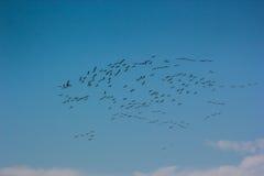 小组共同性抬头蓝天飞行粗碎屑粗碎屑 库存照片