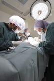 小组兽医手术运转中室 免版税库存图片
