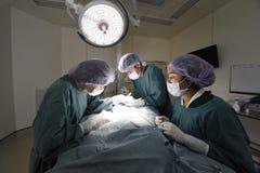 小组兽医手术运转中室 库存图片