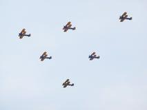小组双翼飞机 免版税库存图片