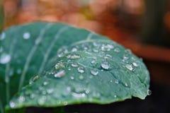 小滴叶子水 图库摄影