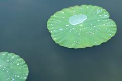 小滴和叶子 库存照片