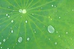 小滴和叶子 免版税库存照片