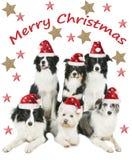 小组四只博德牧羊犬和一条westie狗与圣诞老人帽子 免版税库存照片