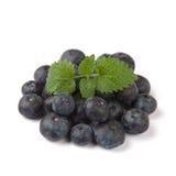 小组在一个圈子的蓝莓与叶子 图库摄影