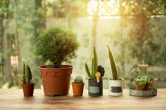 小组在一个罐的小仙人掌有日落光的 免版税库存图片