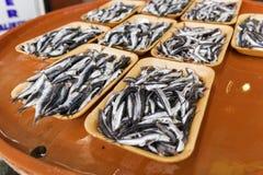 小组在一条五颜六色的长凳的沙丁鱼待售在新海鲜市场上 库存照片