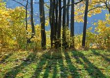 小组在后面照的树在晴朗的秋天天 库存图片