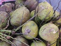小组在地板上的绿色年轻嫩椰子 库存图片