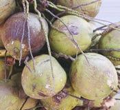 小组在地板上的绿色年轻嫩椰子 免版税库存照片