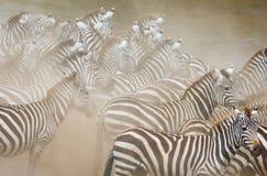 小组在尘土肯尼亚的斑马 坦桑尼亚 国家公园 serengeti 马赛马拉 免版税图库摄影