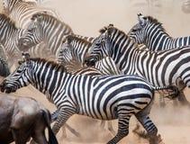 小组在尘土肯尼亚的斑马 坦桑尼亚 国家公园 serengeti 马赛马拉 免版税库存图片