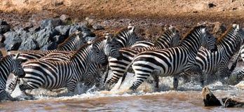 小组在尘土肯尼亚的斑马 坦桑尼亚 国家公园 serengeti 马赛马拉 库存图片