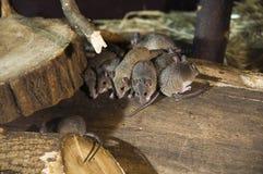 小组在木头的mouses 免版税库存照片