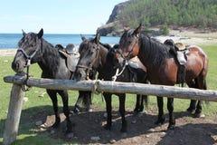 小组在湖的三匹幼小马 免版税库存照片