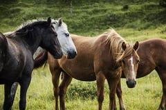 小组在牧场地的马在秋天 库存照片