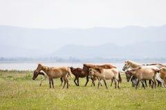 小组在牧场地的马有湖和山背景 图库摄影