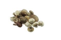 小组在白色的蘑菇 免版税库存图片