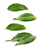 小组在白色的绿色叶子 免版税库存图片