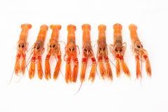 小组在白色背景的新鲜的蝉虾。 免版税库存照片