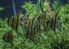小组在Fishbowl的鱼 免版税图库摄影