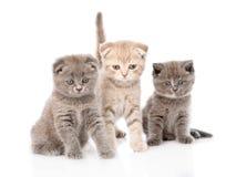 小组坐在前面的小小猫 背景查出的白色 图库摄影