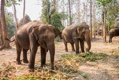 小组大象 库存图片