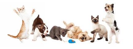 小组嬉戏的猫和狗 免版税库存图片