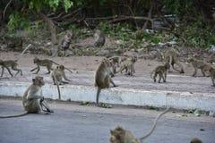小猴子吃 免版税库存照片
