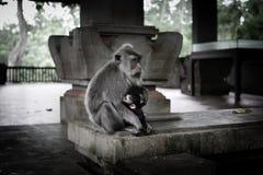 小猴子和它的母亲 库存照片